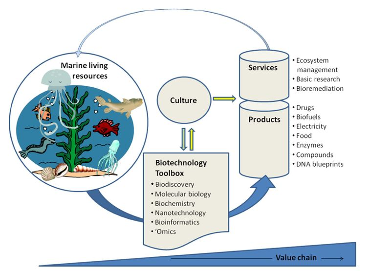 biotechnology thesis Our one-of-a-kind thesis, dissertation, or proposal on biotechnology can include any of the unique features listed at right (click on a feature for details) each feature is.